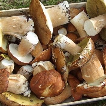 Переработка, хранение грибов в домашних условиях