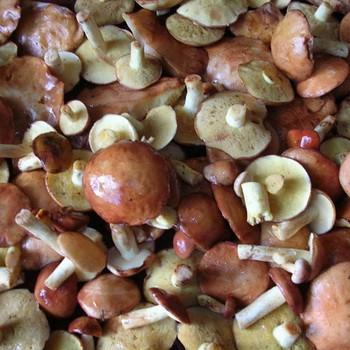 Подготовка маслят к жарке: предварительная обработка грибов