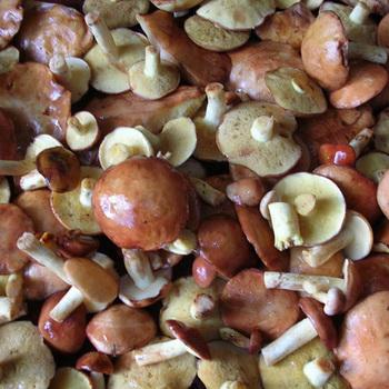 как готовить грибы маслята и сколько варить