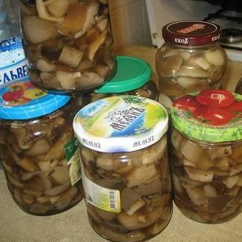 Маринованные ножки грибов: рецепты блюд