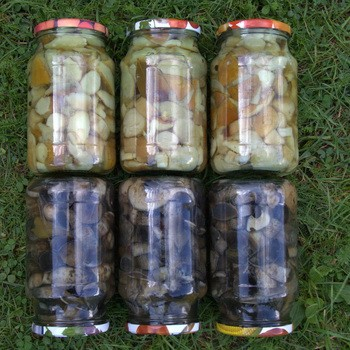Под какие крышки мариновать грибы: советы хозяйкам