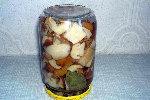 Маслята в масле: как солить и мариновать грибы