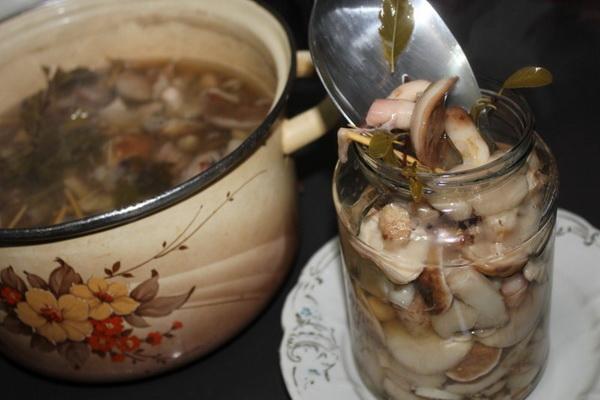Консервация маслят: домашние рецепты