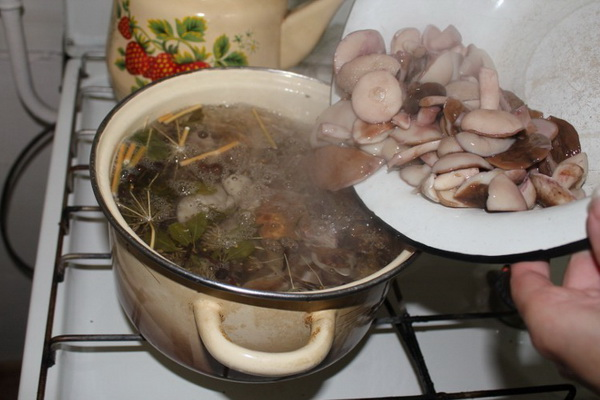 Рецепты пикантных маринадов для грибов маслят