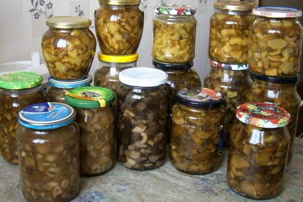 Жареные маслята: рецепты заготовок на зиму