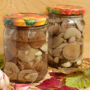 Маринованные маслята с уксусом: рецепты приготовления на зиму