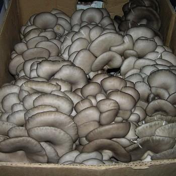 Способы хранения грибов вешенок в домашних условиях