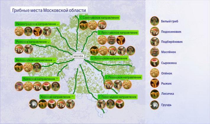 Где и когда собирать опята в Москве и Московской области
