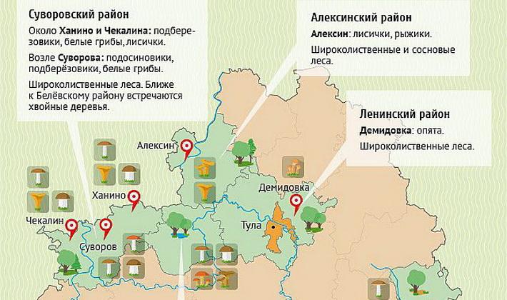 Куда поехать за опятами в Туле и Тульской области