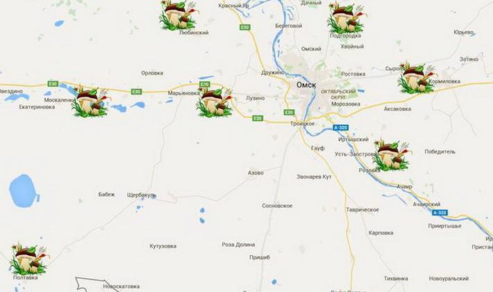 Грибы опята в Омске и Омской области