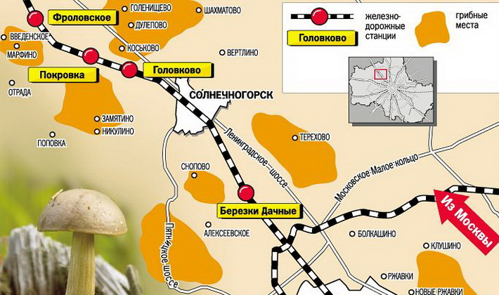 Опята в Курской области: где найти и когда собирать