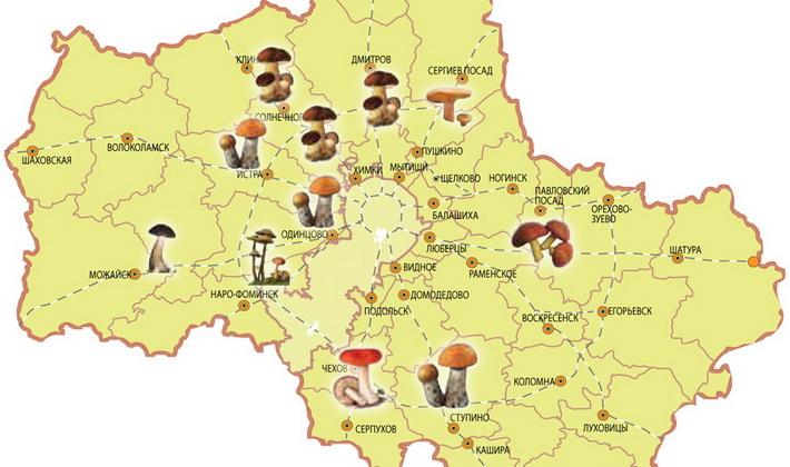 Осенние и зимние опята в Курске и Курской области