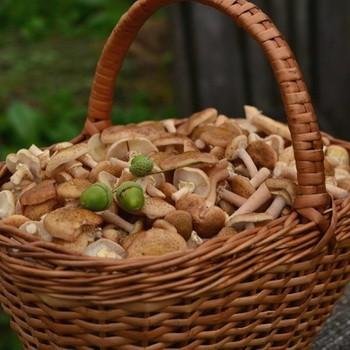 Надо ли удалять пленку у грибов опят?