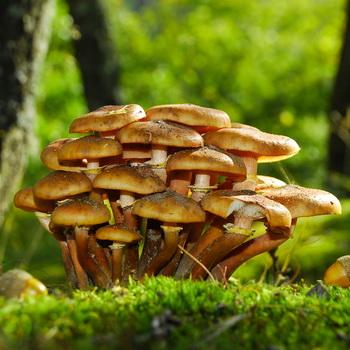 Опята в Орловской области: где собирать грибы