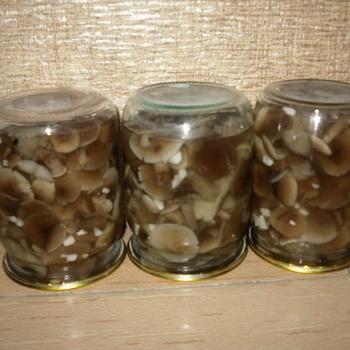 Закрутка опят на зиму: как мариновать грибы