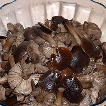 грибы вареные рецепт