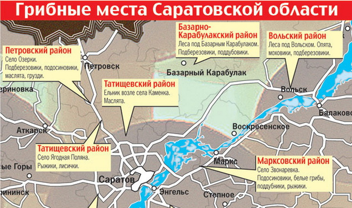 Летние, осенние и зимние опята в Саратовской области