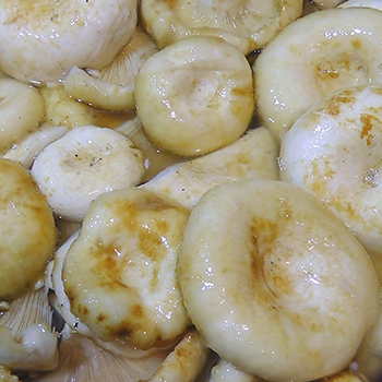 Рецепты соления грибов груздей