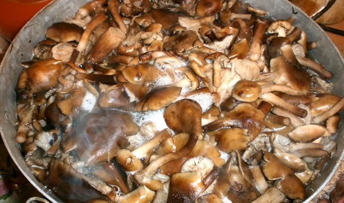 Опята на зиму без закатки: рецепты заготовок