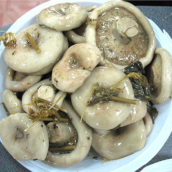 Рецепты маринованных белых груздей (с фото)