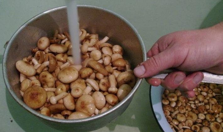 Соление опят горячим способом: рецепты на зиму