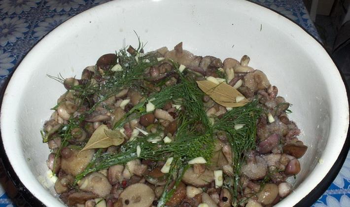 маслята на зиму рецепты с фото пошагово
