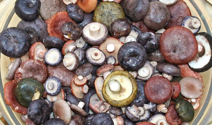 Солёные грибы свинушкиы приготовления