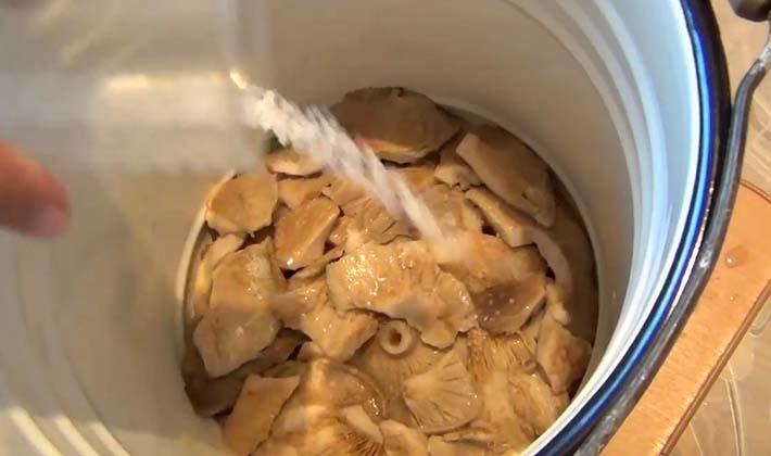 Рецепты засолки белых груздей горячим и холодным способом в банки