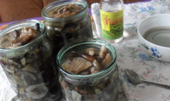 Соленые опята в банках: рецепты заготовок из грибов