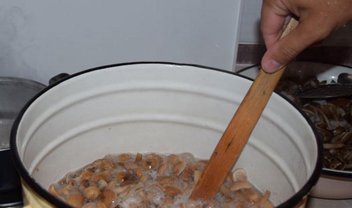 Рецепты засолки опят самыми простыми способами