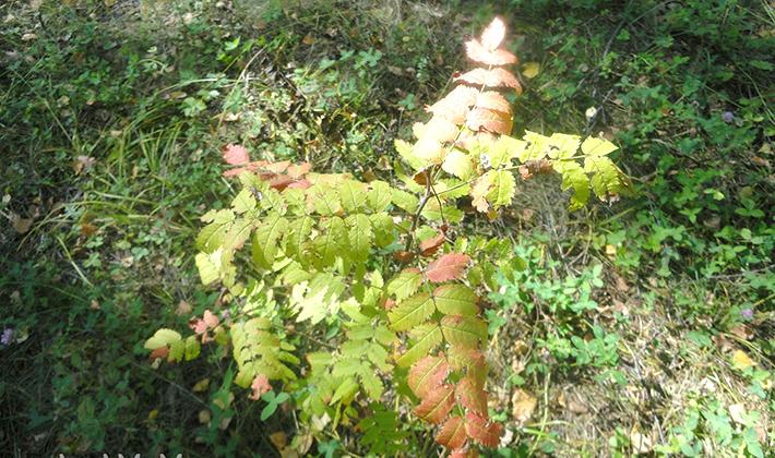 Где растут грузди в лесу и как их искать