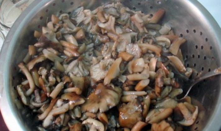Засолка опят горячим способом: домашние рецепты