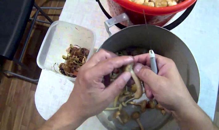 Как приготовить грузди в томате