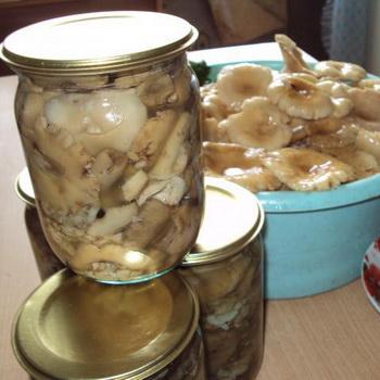 сыроежки рецепты приготовления с фото