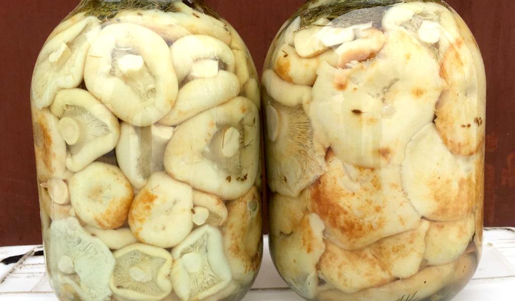 Холодная и горячая засолка груздей с уксусом на зиму