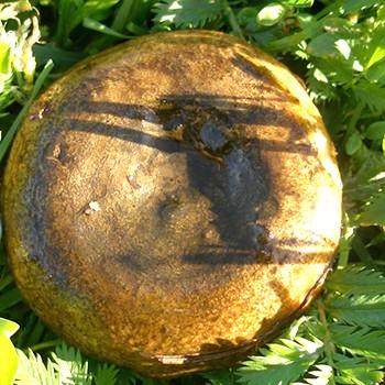 Как быстро почистить грибы грузди от земли и грязи (с видео)