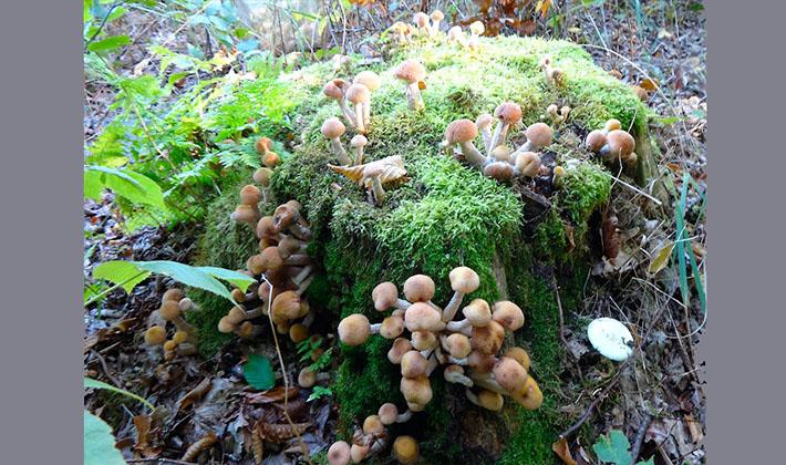 Где растут грибы грузди: в каких лесах их искать