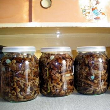 Засолка осенних опят: рецепты на зиму