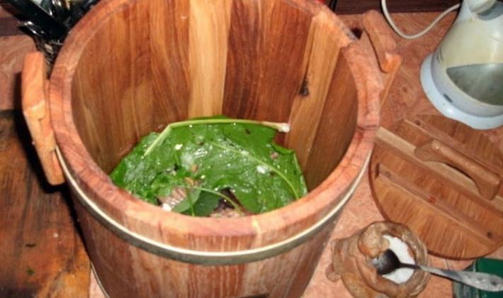 Засолка опят холодным способом: рецепты на зиму