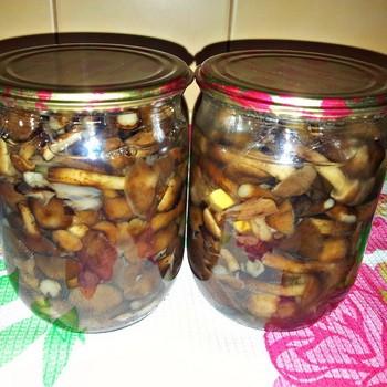 Опята на зиму: рецепты грибных заготовок