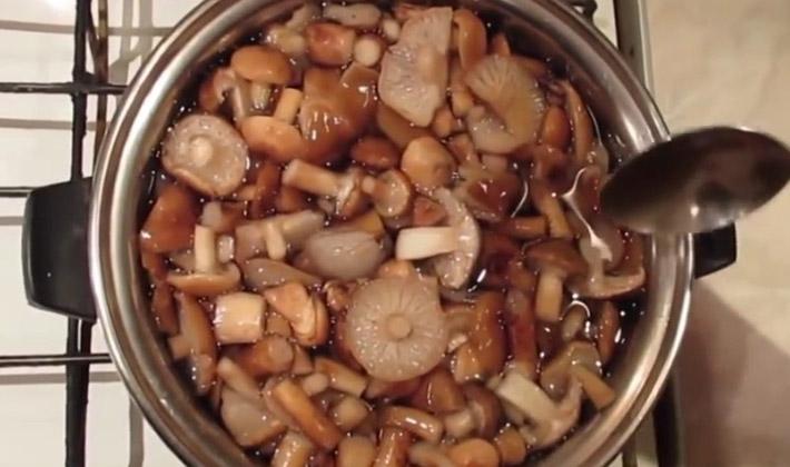 Как готовить свежие опята: рецепты блюд из грибов