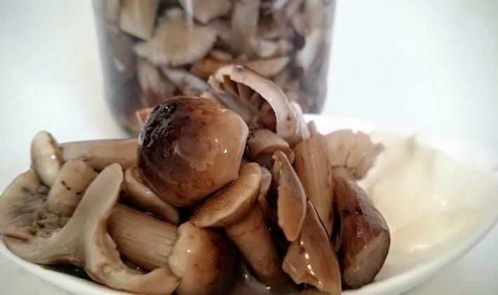 Способы маринования опят: пошаговые рецепты с фото