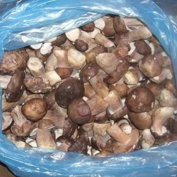 Как правильно заморозить грибы рядовки на зиму