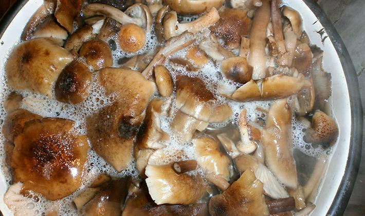 Грибная икра по рецептам приготовления из белых грибов
