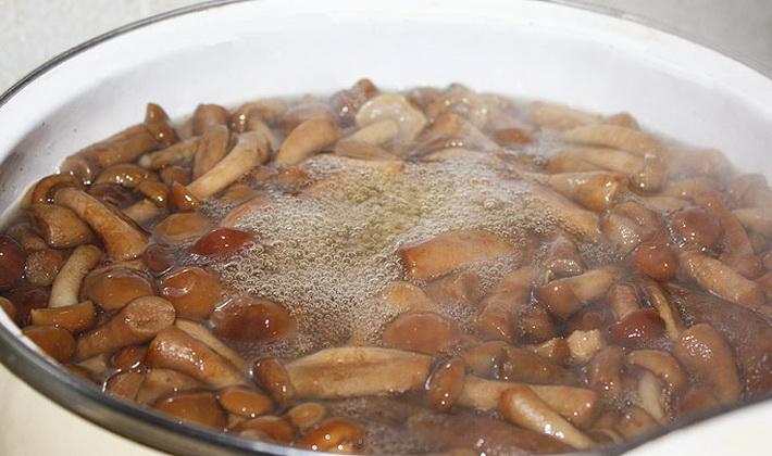 Рецепты заготовок из пеньковых опят на зиму