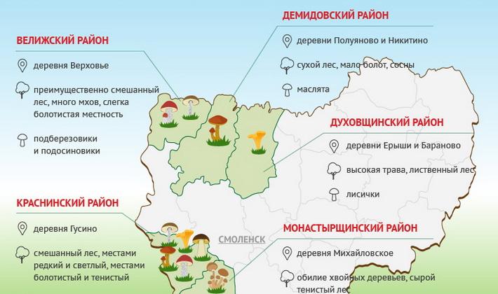 Белые грибы в Краснодарском крае: места и сезон сбора