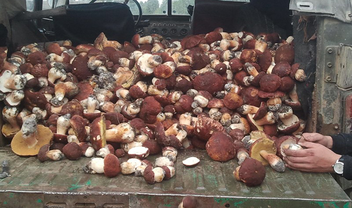 Какие вкусные заготовки из белых грибов можно сделать