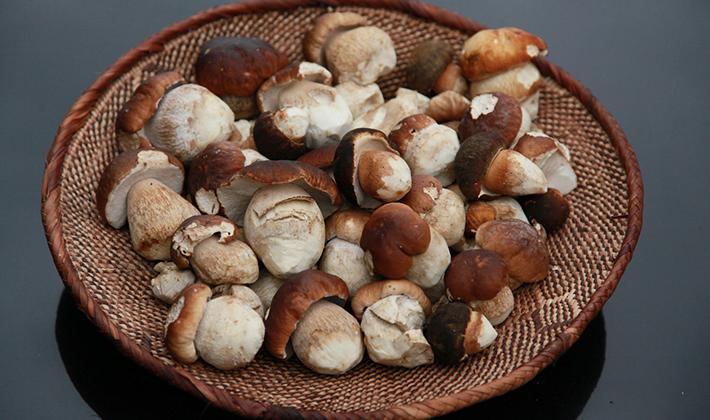 белые грибы маринованные простой рецепт рецепты приготовления