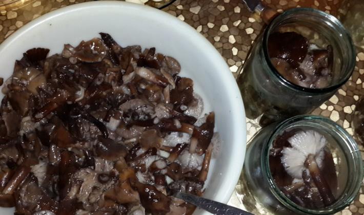 Как правильно солить грибы опята: домашние рецепты
