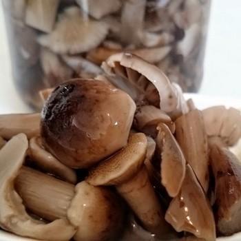 Заготовка осенних опят на зиму: домашние рецепты